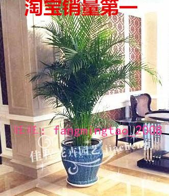 大型客厅室内 盆栽绿植花卉