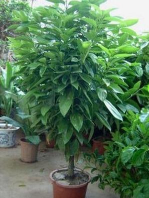 大盆栽植物室内客厅搭配图片