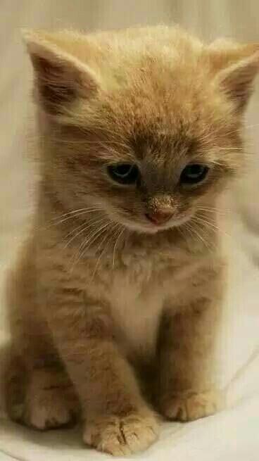 【非常可爱的小猫咪,自家养的!】-无类目--qq_41455a