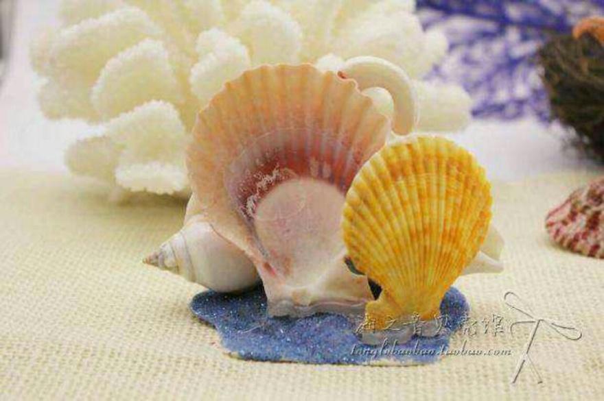 手工制作!海螺贝壳工艺品摆件