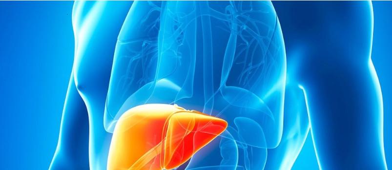 医学3D打印:3D打印肝脏可能性